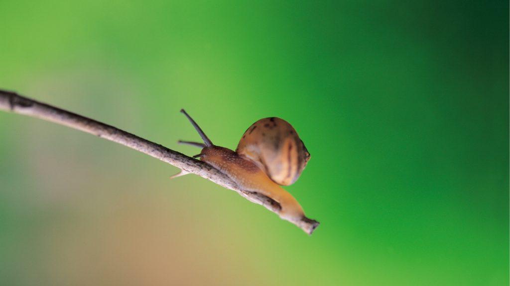slak op een tak die de tuin uit moet