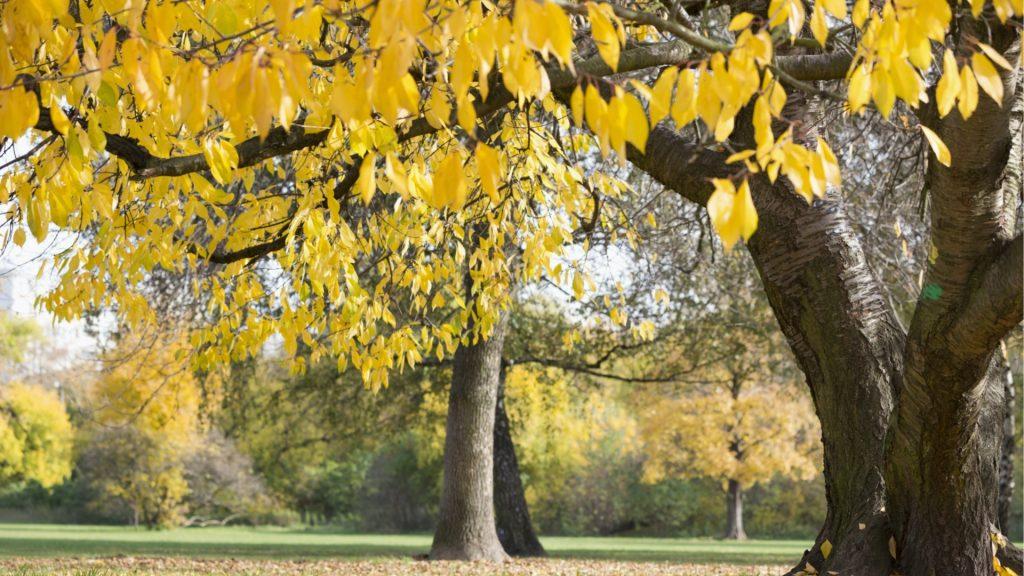 welke boom past in de tuin